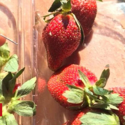 Australia strawberry scare: Woolworths halts sewing needle sales